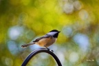 While Chickadees Flew Overhead